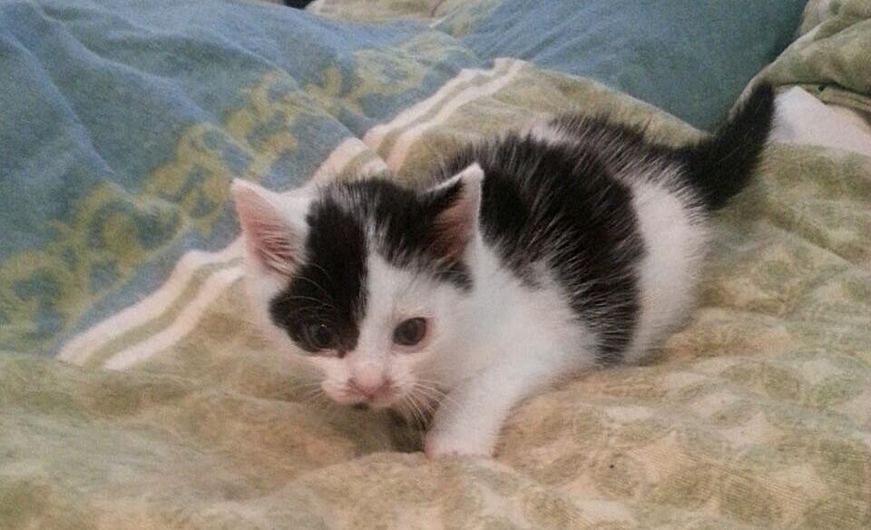 13 neue babykatzen in den letzten 5 tagen tierheim l bbecke. Black Bedroom Furniture Sets. Home Design Ideas